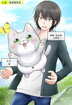 布吉猫的封面图